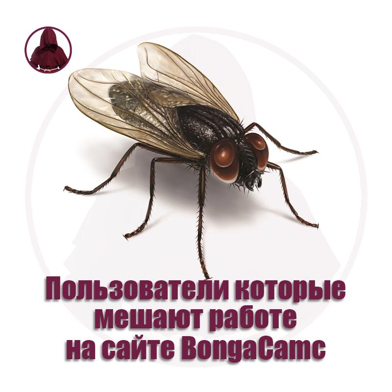 Пользователи которые мешают работе на сайте BongaCamc